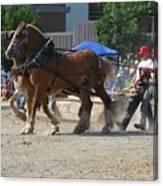 Horse Pull Team A Canvas Print