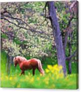 Horse Running In Spring Woods Canvas Print