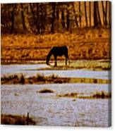 Horse Silhouetted Canvas Print