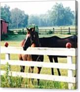 Horse Stable Canvas Print