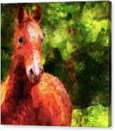Horse Study #2 Canvas Print