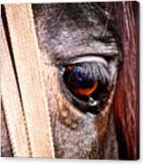 Horse Tears Canvas Print