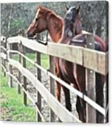 Horse Whisperers Canvas Print