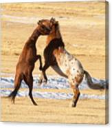 Horseplay Canvas Print