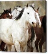 Horses-01 Canvas Print