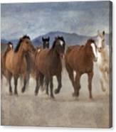 Horses-03 Canvas Print