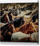 Horses 29 Canvas Print