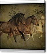 Horses 30 Canvas Print