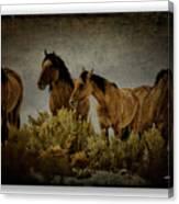 Horses 34 Canvas Print