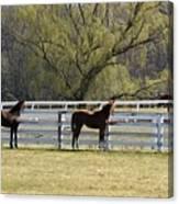 Horses 363 Canvas Print