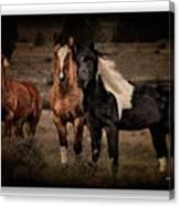 Horses 40 Canvas Print
