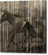 Horses Abstract Mare And Foal Canvas Print