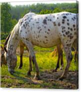 Horses And Buttercups Canvas Print