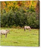 Horses Enjoying A Beautiful Autumn Day Canvas Print