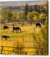 Horses Grazing In The Late Afternoon Canvas Print