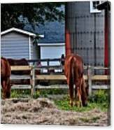 Horses Grazing Canvas Print