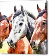 Horses - Id 16217-202757-3803 Canvas Print