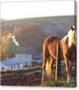 Horses In Autumn Frosty Sunrise Canvas Print