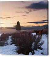 Horses In Snow At Sunset Canvas Print