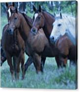 Horses Looking Canvas Print