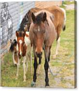 Horses On A Street Canvas Print