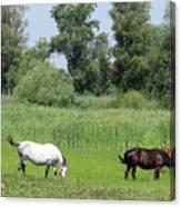 Horses On Pasture Nature Farm Scene Canvas Print