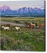 Horses Walk Canvas Print