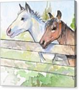Horses Watercolor Sketch Canvas Print