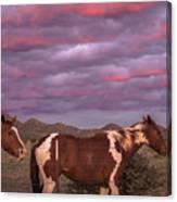 Horses With Southwest Sunset Canvas Print