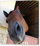 Horsey In My Face Canvas Print