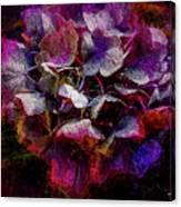 Colorful Hortensia Closeup Canvas Print