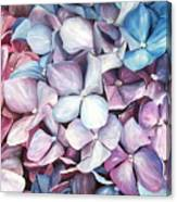 Hortensias Canvas Print