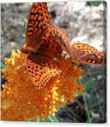 Horton Butterflies Canvas Print