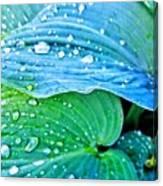 Hosta After The Rain Canvas Print