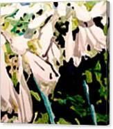 Hosta Blooms Canvas Print