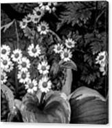 Hosta Daisies Canvas Print