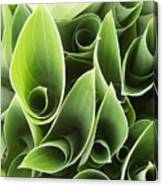 Hostas 5 Canvas Print