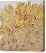 Hostas Canvas Print