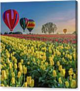 Hot Air Balloons Over Tulip Fields Canvas Print