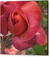 Hot Cocoa Rose Canvas Print