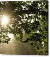 Hot Golden Mists Of Summer Canvas Print