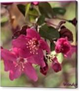 Hot Pink Blossoms Canvas Print