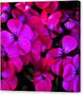 Hot Pink Florals Canvas Print