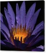 Hot Purple Water Lily Canvas Print