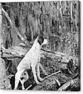 Hound Dog Canvas Print