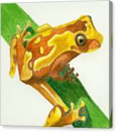 Hourglass Frog Canvas Print