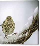 House Finch Snow Is Coming Canvas Print