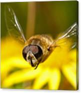 Hoverfly In Flight Canvas Print