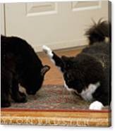 How Cat Fights Start Canvas Print