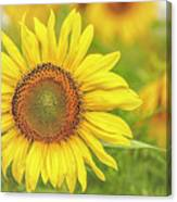 How Do You Dew, Sunflower Canvas Print